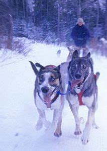 sledding vermont vermont sledding tours dogsled vacations vt sledding lodging inns resorts vt