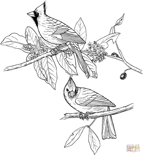 red cardinals coloring page free printable coloring pages