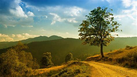 wallpaper sunlight trees landscape forest sunset