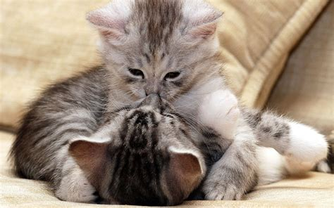 wallpaper cat love cats love wallpapers 1920x1200 809088