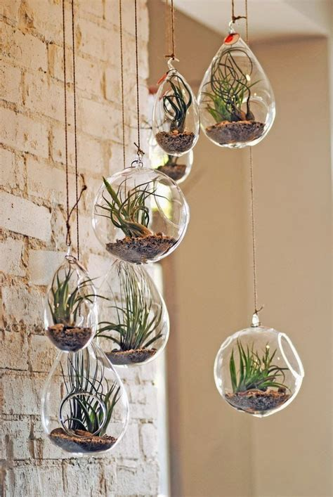 hanging air plant 25 best ideas about air plants on pinterest hanging air