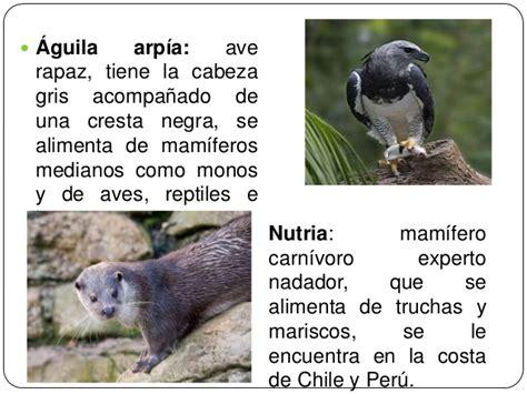 imagenes de animales nativos del peru plantas y animales nativos del per 250