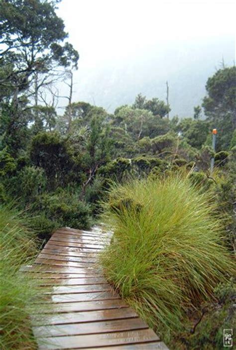 wooden path chemin de bois sophie s maze