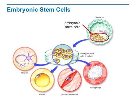 stem cells stem cells