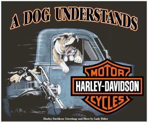 harley davidson a dog understands harley davidson