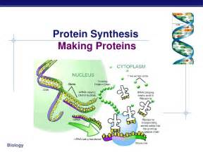 dna and protein synthesis worksheet abitlikethis