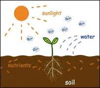 plants that need sunlight what a plant needs to grow home education spring