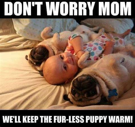 baby and pug baby pugs memes