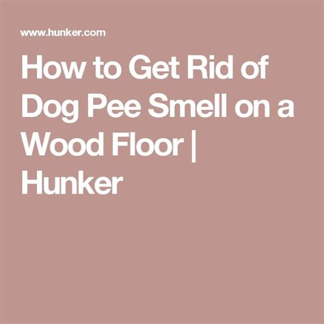 how to get rid of dog odor in house wood floor in bathroom smells like urine gurus floor