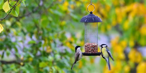 squirrel proof bird feeders   buy
