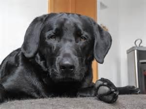 auf dem sofa unser hund auf dem sofa hundeerziehung jetzt