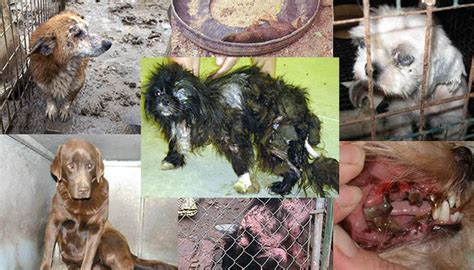 u s needs to abolish inhumane puppy mills the ring of