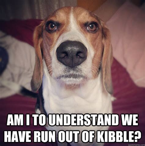 Beagle Meme - if you re a beagle parent you re going to relate to these