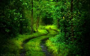 beautiful green forest path