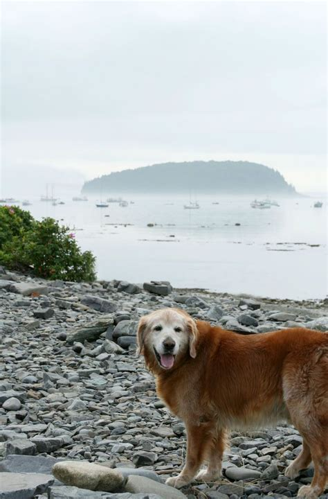dogs in national parks a owner s guide to visiting national parks mnn nature network