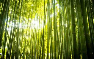 bamboo full hd wallpaper and background 1920x1200 id 313663
