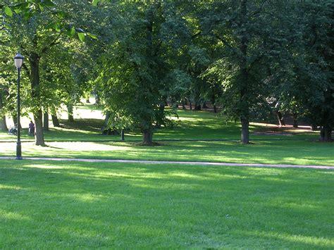 giardini con prato inglese image gallery prato giardino