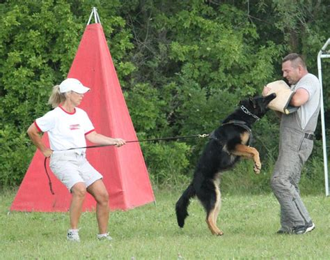 dogs for sale in mn minnesota k 9 solutions personal protection dogs for salein minnesota