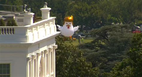 trump white house residence huge inflatable trump chicken erected behind the white house