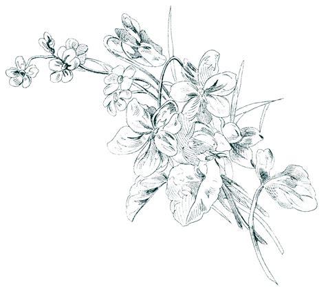 sketch free free vintage image floral sketch design shop