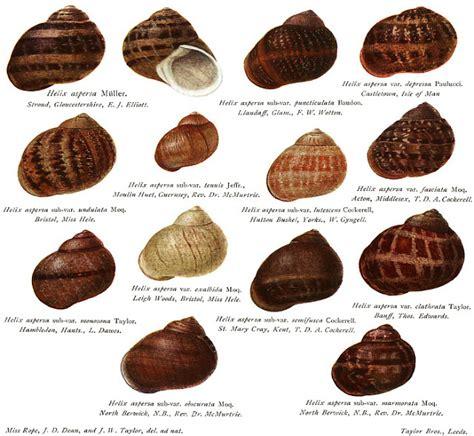 Types Of Garden Snails - fidgety fingers which garden snail is edible