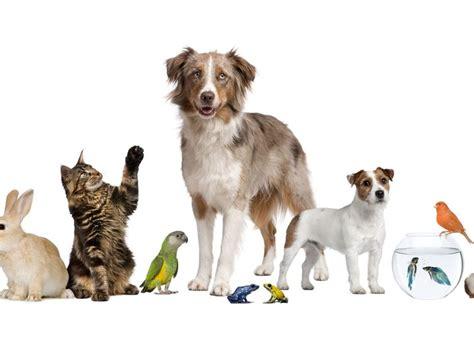imagenes de animales uñas день домашних животных