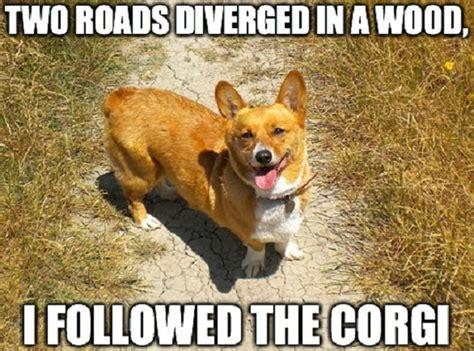 Corgi Puppy Meme - 10 funny corgi memes