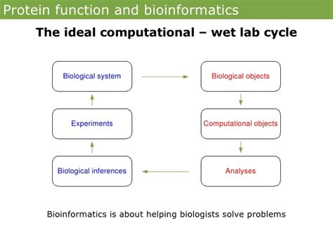 n protein function protein function and bioinformatics