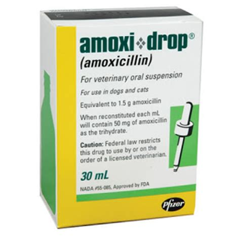 side effects of amoxicillin in dogs vet amoxicillin in the dose rate info side effects