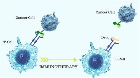 cell based immunotherapy for cancer is cell based immunotherapy a realistic prospect to treat