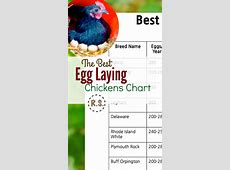 Best Egg Laying Chickens Chart I'm Just A Bill Download