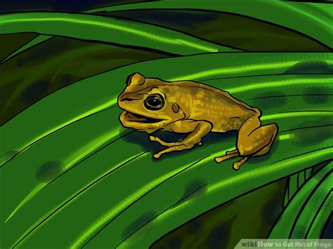 how to get rid of cane toads in backyard how to get rid of frogs with pictures wikihow