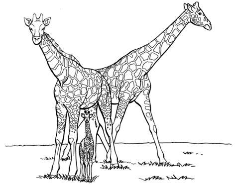 difficult giraffe coloring pages sch 246 ne ausmalbilder malvorlagen giraffe ausdrucken 2