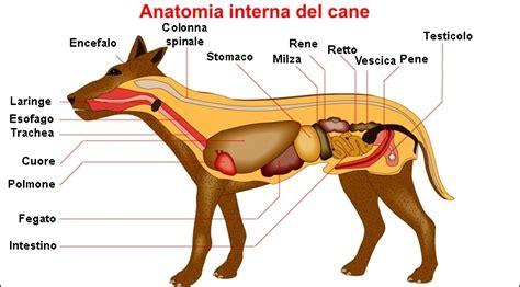 anatomia interna corpo umano apparato digerente omeovet omeopatia veterinaria
