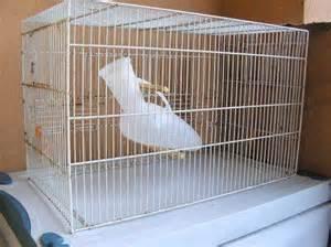 pappagallo in gabbia ottobre 2014 milocca milena libera pagina 28