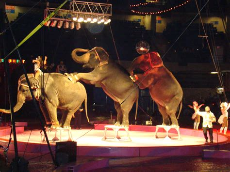 katherine johnson las vegas ansar shrine circus katherine johnson flickr