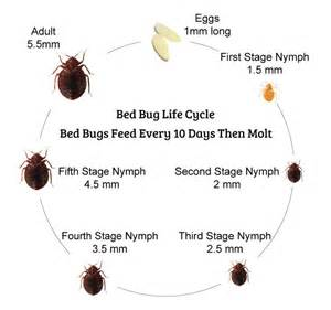 1000 images about blogs about bed bugs on