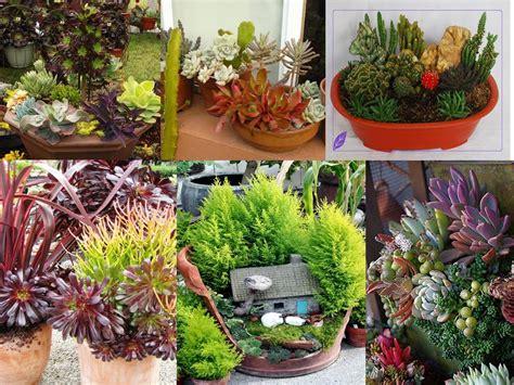 Jual Cermin Hias Bandung bumikai landscape jual bibit kaktus hias jasa pembuatan taman bumikai landcape