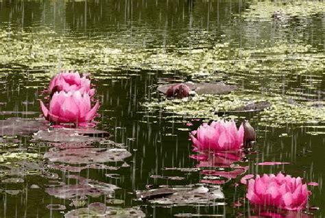 imagenes rosas gif bonitas imagenes gif de flores y lluvia