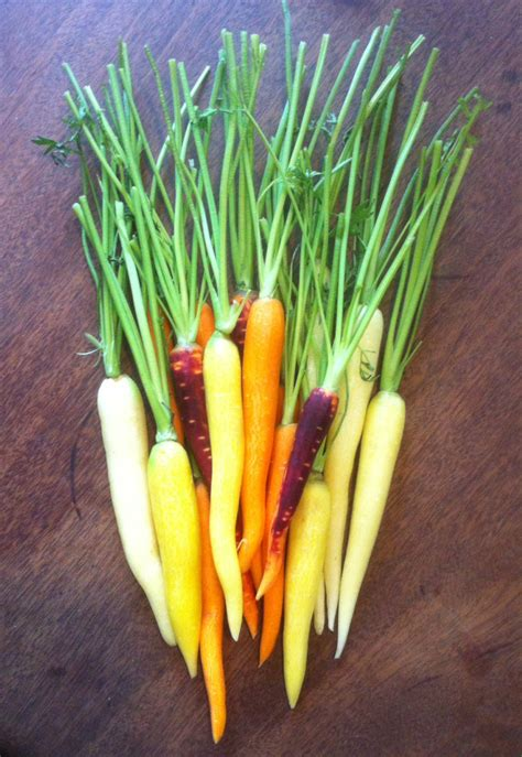 colored carrots recipe simple colored carrots