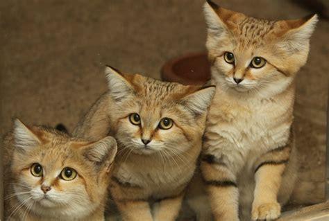 Bildergebnis für special cats