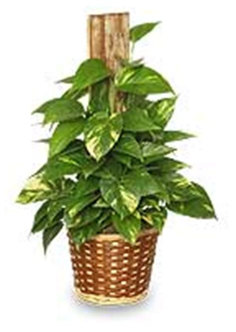house plant identifier house plant identification guide by picture www pixshark com images galleries with