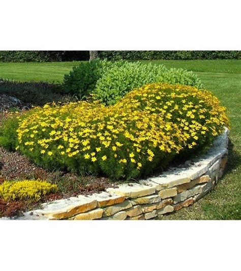 allestimento giardini progettazione e allestimento giardini pierpassoni it