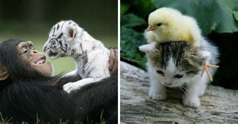 Animal World by 22 Photos Proving The Animal World Is Such A Better Place