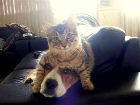 cute cat monday    dog