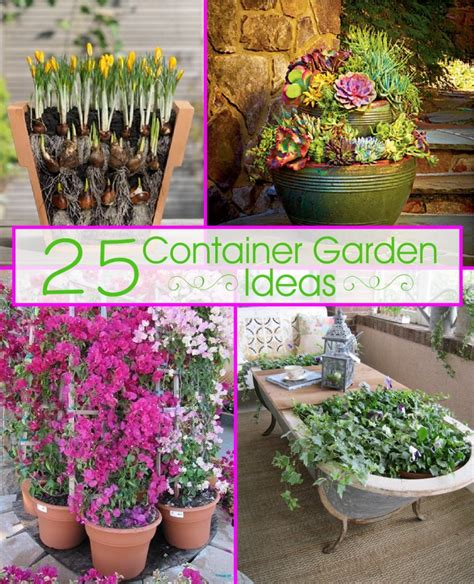 Gardening Container Ideas Container Garden Ideas Photograph 25 Container Garde