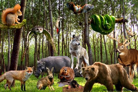 Where All The Animals by Of Different Animals Together