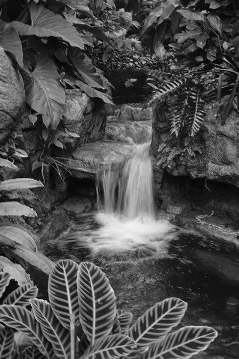 stock photo  black  white garden rainforest