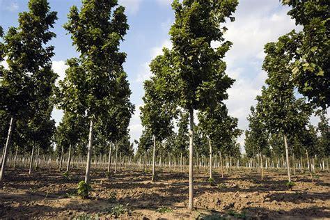 Landscape Supply Elburn Il Plant And Tree Nurseries In Illinois