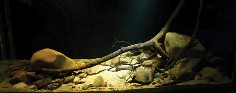 biotope aquascape unbounded passions aquatic gardeners aquascape winners